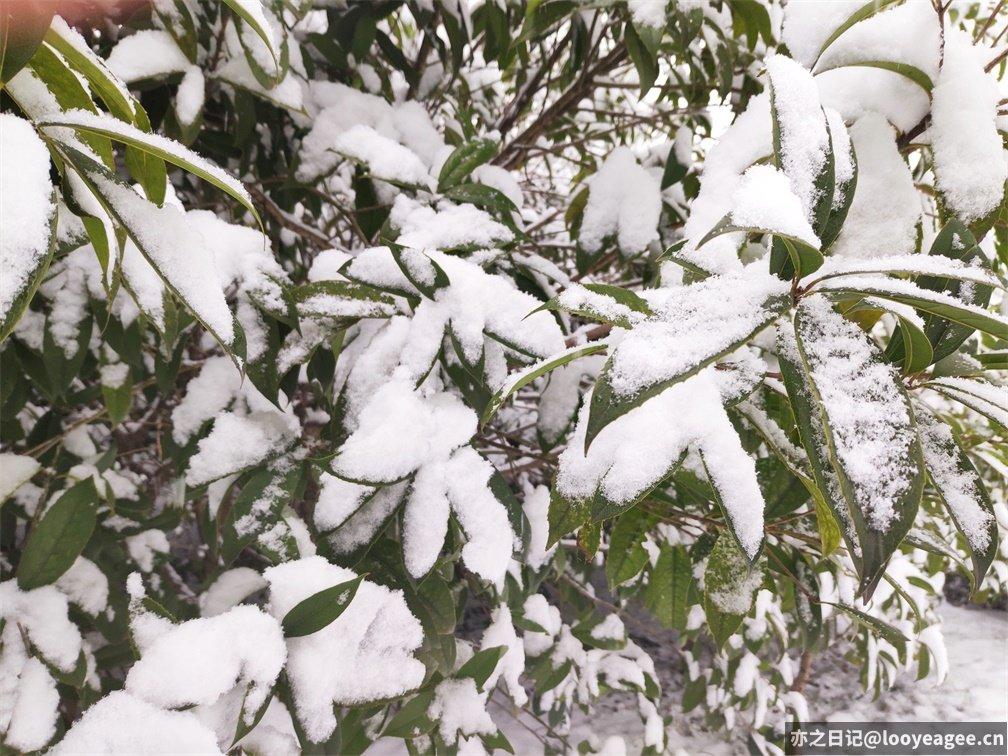 图1:树上的雪